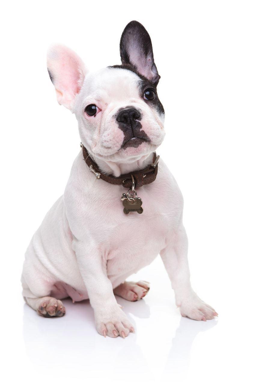 The Pet Professional Guild - Pet Care Topics