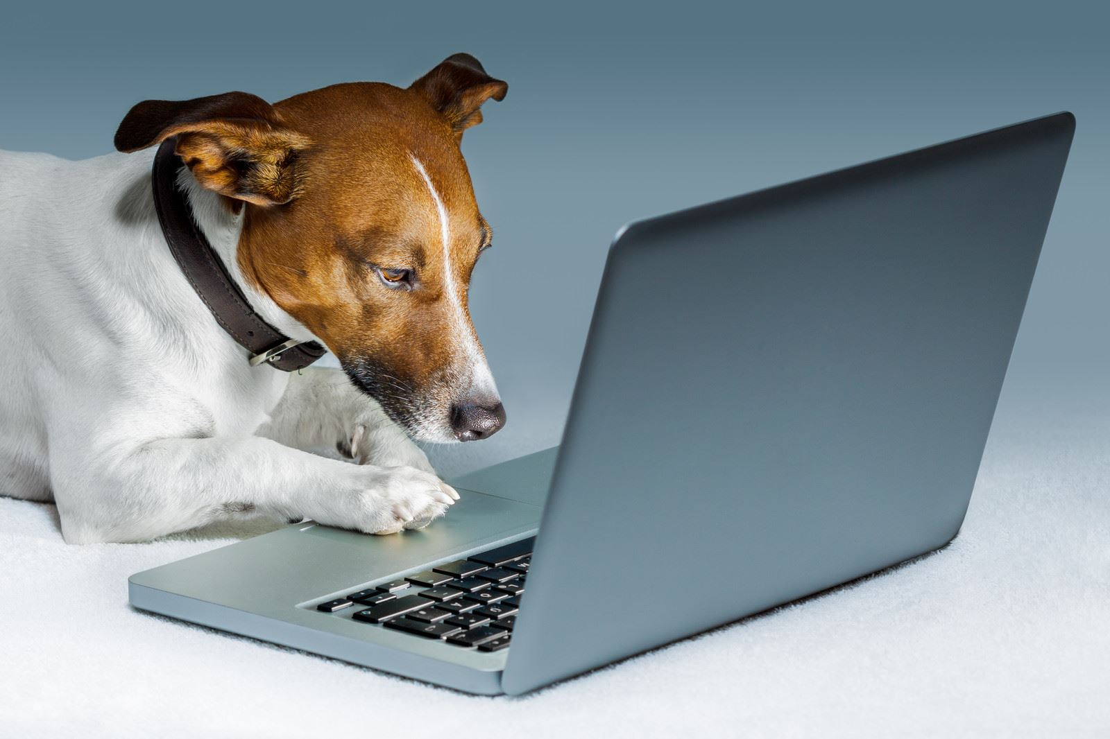 Image result for dog and cat using computer