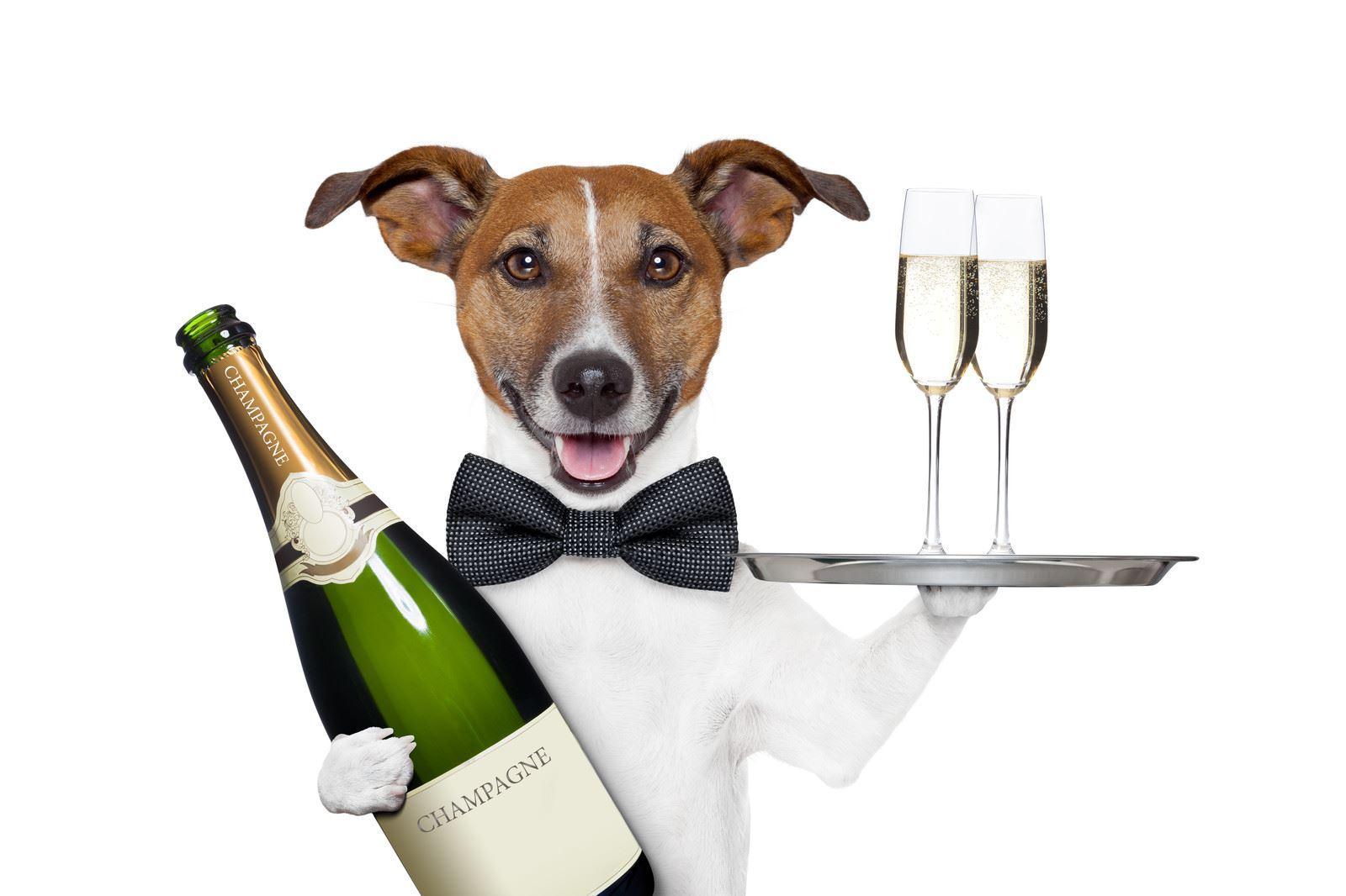 С днем рождения картинка собака с бокалом